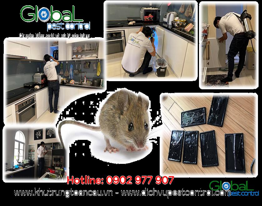 dịch vụ kiểm soát, xử lý, diệt chuột, pest control